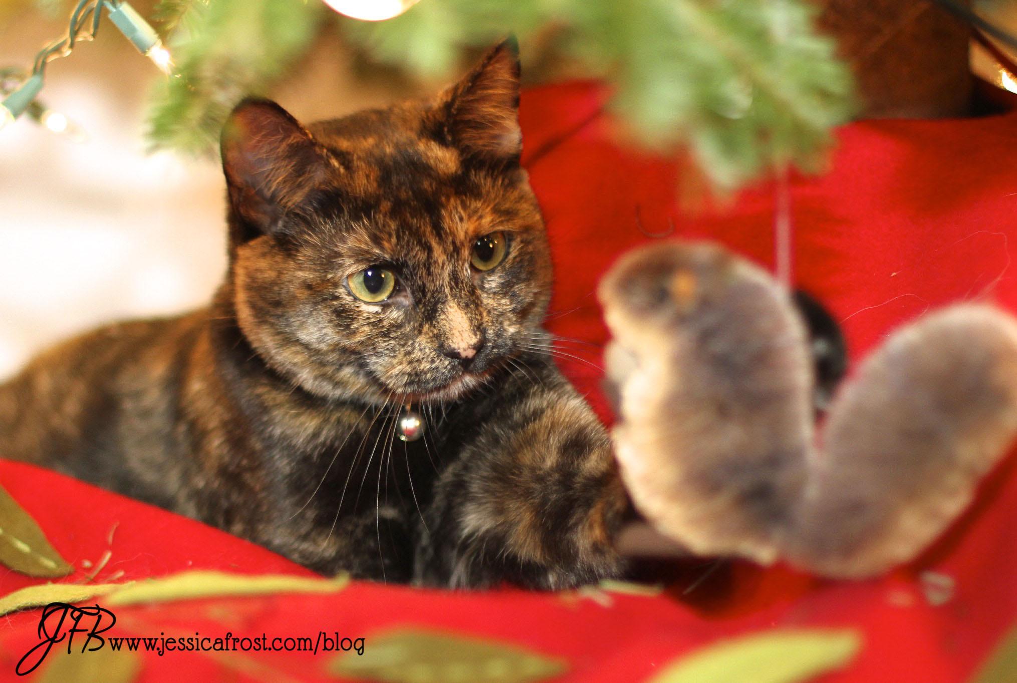 Christmas 2014 Recap!