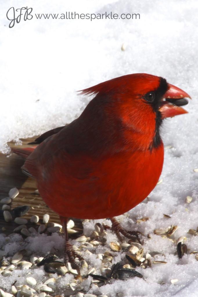 male cardinal www.allthesparkle.com