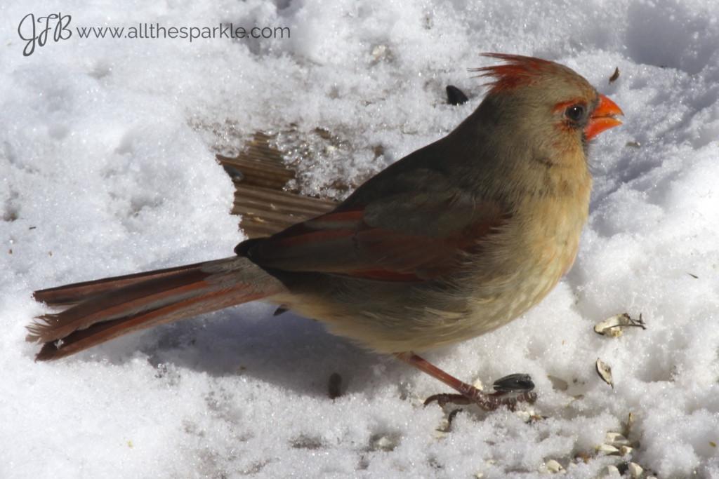 female cardinal www.allthesparkle.com