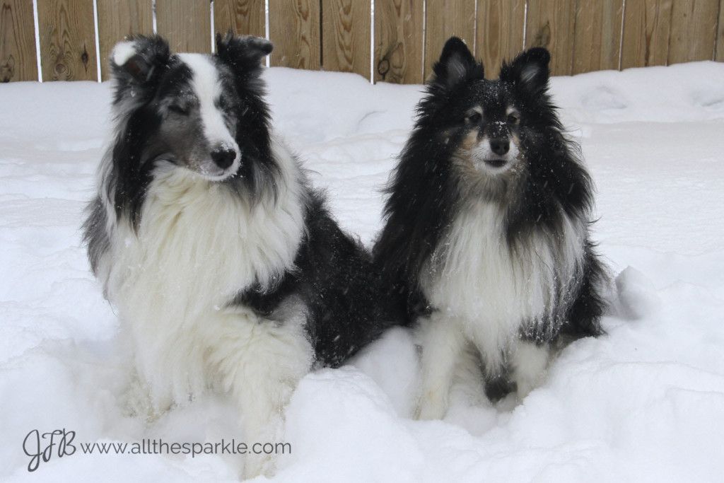 shelties snow www.allthesparkle.com